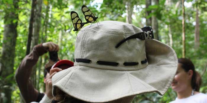 Butterflies-in-love-on-hat